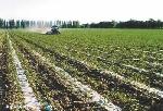 万博体育官网登录注册水肥一体节水蔬菜膜下滴灌